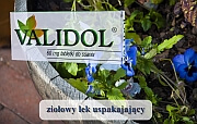 choroba lokomocyjna - validol - Validol