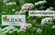 stany lękowe - validol - Validol