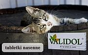 nerwica czynnościowa - validol - Validol