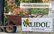działanie rozkurczowe - validol - Validol